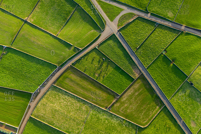 Aerial view of the green fields of Terceira Island countryside in the Azores archipelagos, Portugal.
