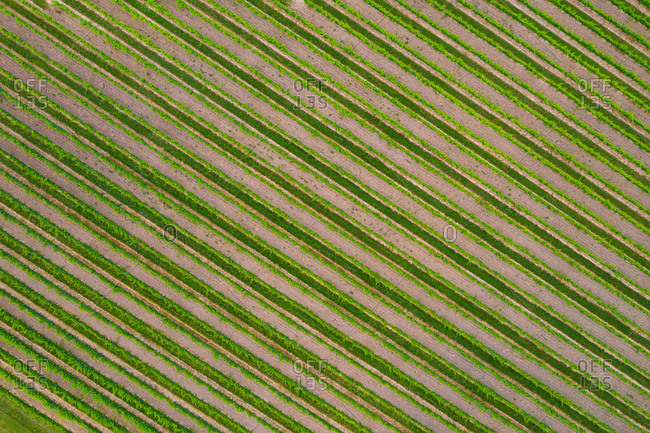 Aerial view of vineyard and the orchards near the Niagara Falls in Canada.