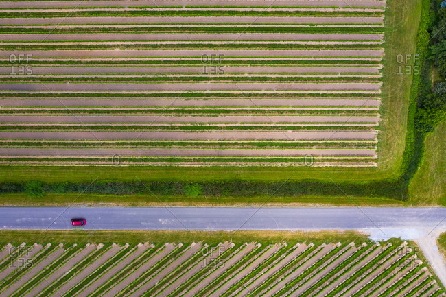 Aerial view of abstractions at a vineyard at Niagara on the Lake in Canada in early spring.
