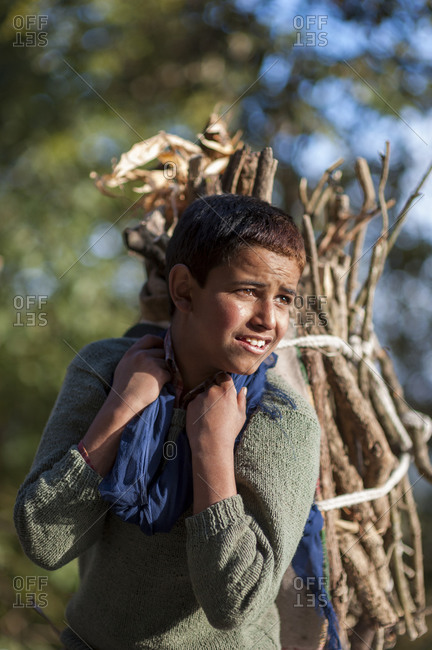 Almora district, Uttarakhand, India - December 7, 2008: A boy carries fire wood on his back in a bundle