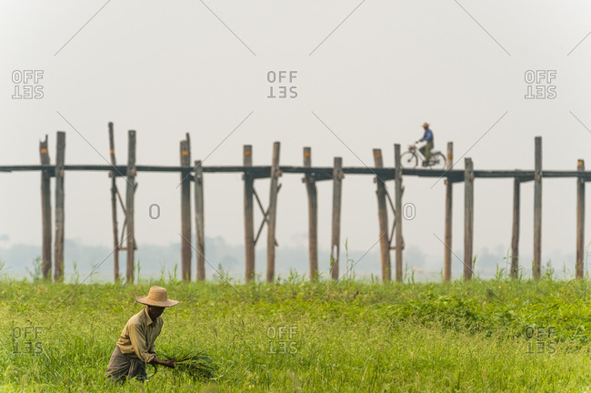 U Bein Bridge, Amarapura, Mandalay District, Myanmar - March 26, 2010: A man collects grass in front of the U Bein Bridge, a 1.2 km wooden footbridge (longest teak bridge in the world) built by the mayor U Bein salvaging the unwanted teak columns from the old palace during the move to Mandalay