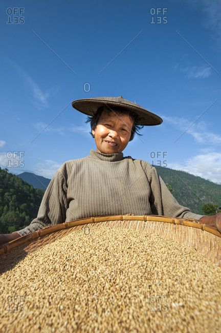 A woman uses the traditional method of sorting rice called 'winnowing'