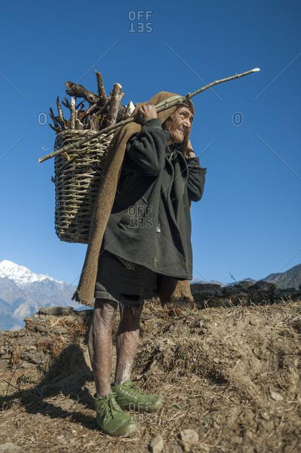 An elderly Gurung man from the Manaslu region carries firewood