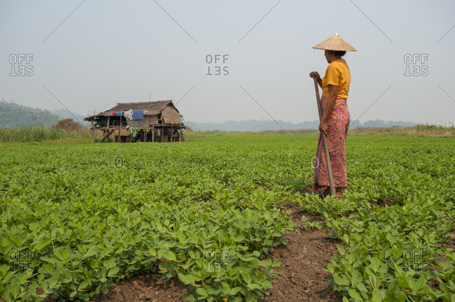 A peanut plantation next to Indawgyi lake in Kachin State in north Myanmar