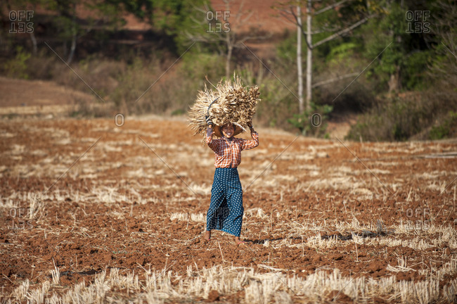 A girl carries a bundle of freshly harvested wheat on her head