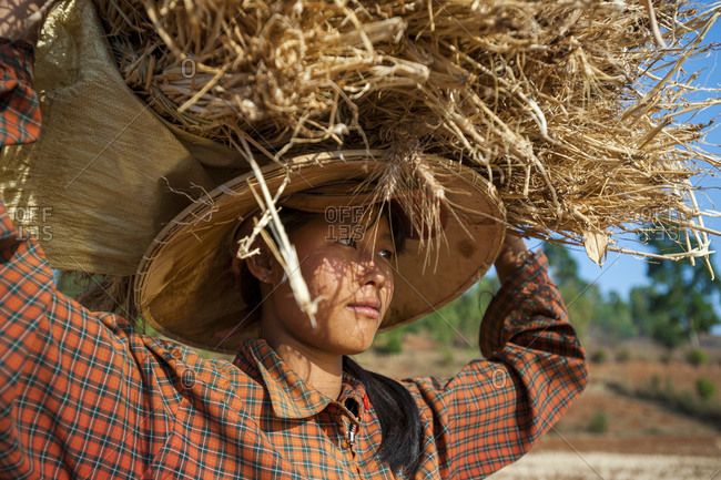 A girl carries wheat on her head during the harvest
