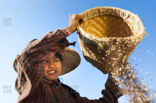 A Burmese girl winnows wheat, which is to sort away the husks, by pouring it in the wind.