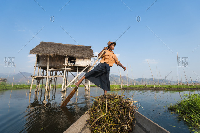 A fisherman paddles through the floating gardens on Inle lake using a traditional method of standing and sculling with one foot