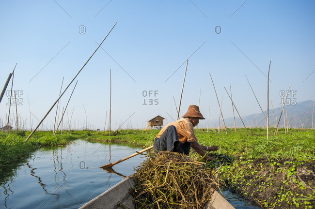 A man works while sitting on his canoe in the floating gardens on Inle Lake