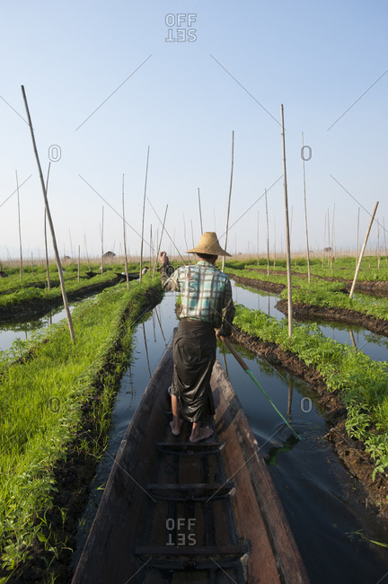 A man paddles through the floating gardens on Inle lake
