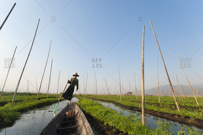 A man paddles through the floating gardens on Inle lake using a traditional method of standing and sculling with one foot
