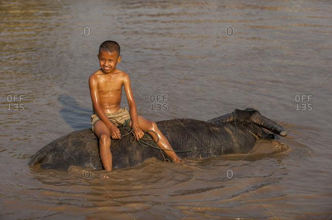 A boy takes his buffalo into Inle lake for a wash