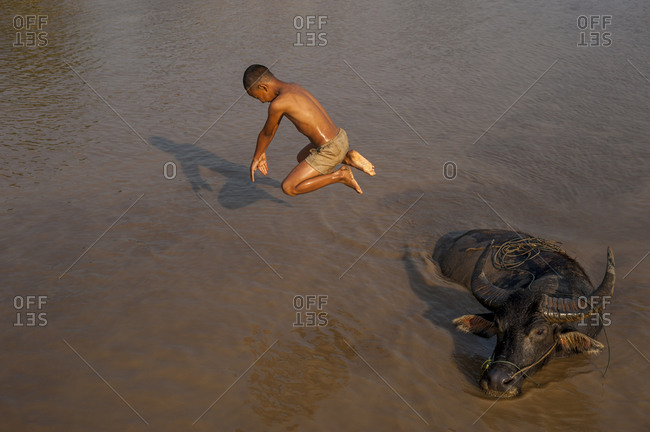 A boy plays in the water by jumping from a buffalo on Inle lake