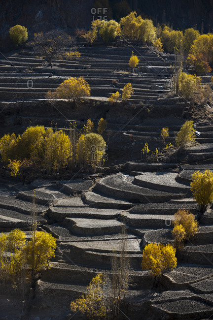 Rice terraces in winter near Hushe village in northern Pakistan