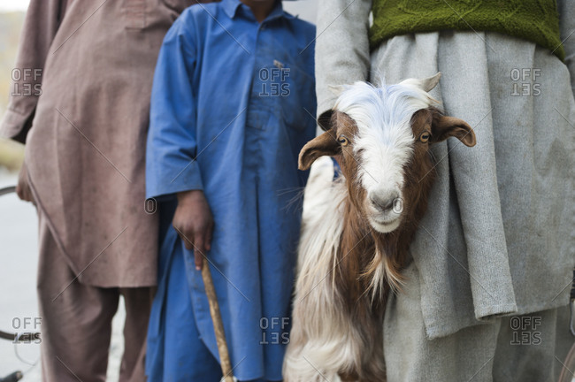 A shepherds children help to look after the goats