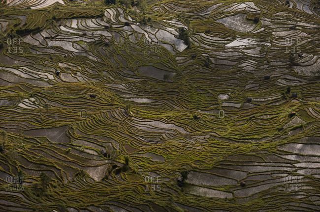 The Yuanyang rice terraces were fashioned over hundreds of years
