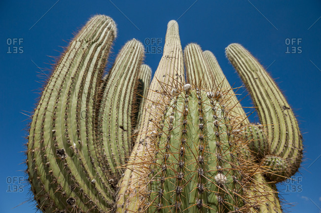 Close up of spiky cactus needles protruding from a cactus plant