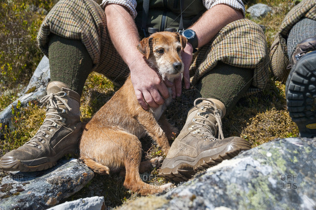 A terrier out on the Glen