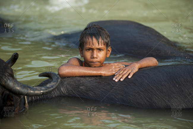 Children play in a river with the water buffaloes