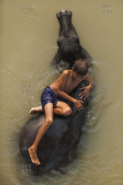 A Nepali boy goes for a ride on the back of a water buffalo