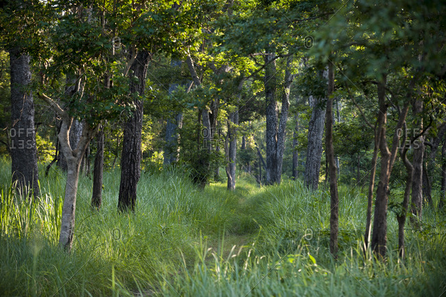 Forest in Bardiya National Park in the Karnali district of west Nepal