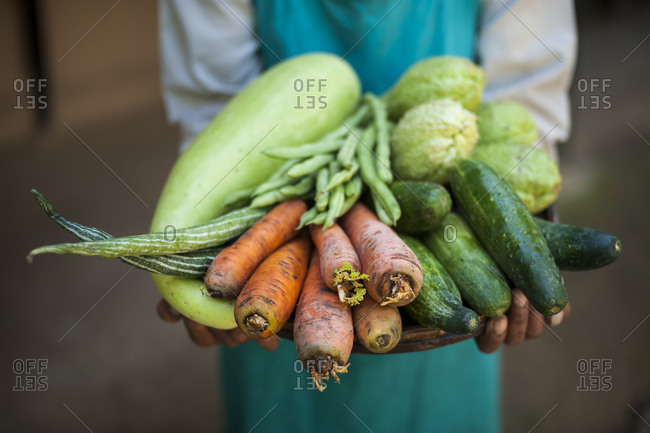 Freshly harvested organic vegetables at an organic farm in Nepal