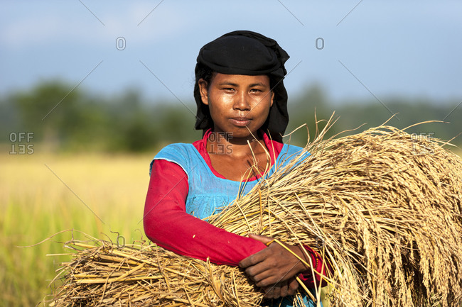 A woman holds a bundle of harvested rice
