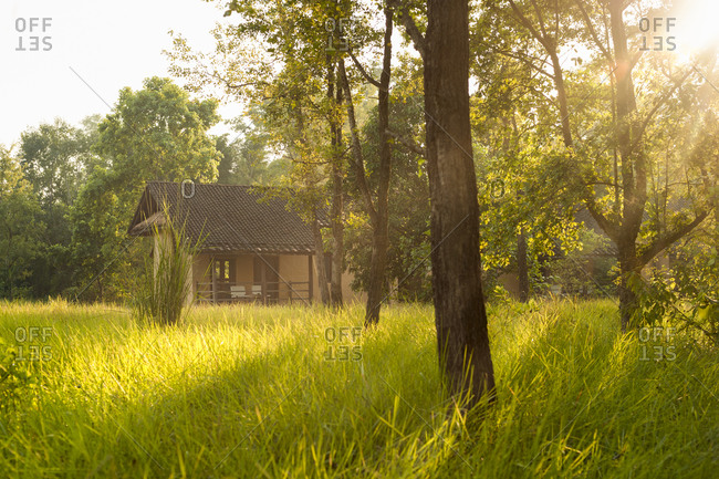 Safari lodge among the trees in Bardia National Park in Nepal