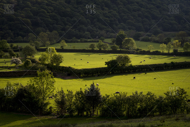 Fields near Buttermere in The Lake District