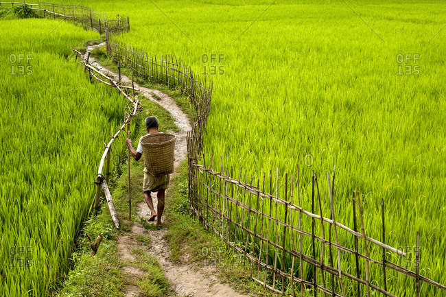 A man carrying a traditional bamboo basket walks through rice paddies in the Chittangong Hill Tracts in Bangladesh