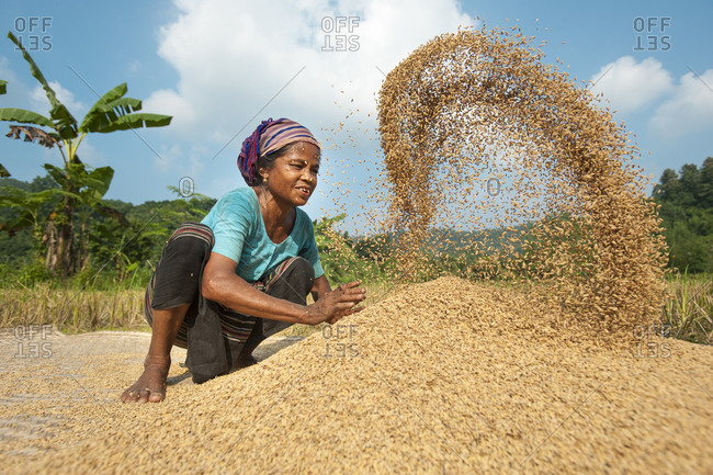 A woman in the Chittangong Hill Tracts throws rice up into the air with her hands while someone else fans air through it to clear away the lighter chaff or husks
