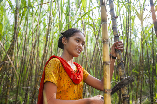 A girl harvests sugarcane in the Rangamati District in the Chittagong Hill Tracts in Bangladesh