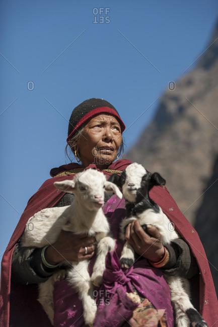 Dobhan, Jagat, Manaslu region, Nepal - February 23, 2012: A Nepali shepherd returns two baby goats known as Kids back to their mother