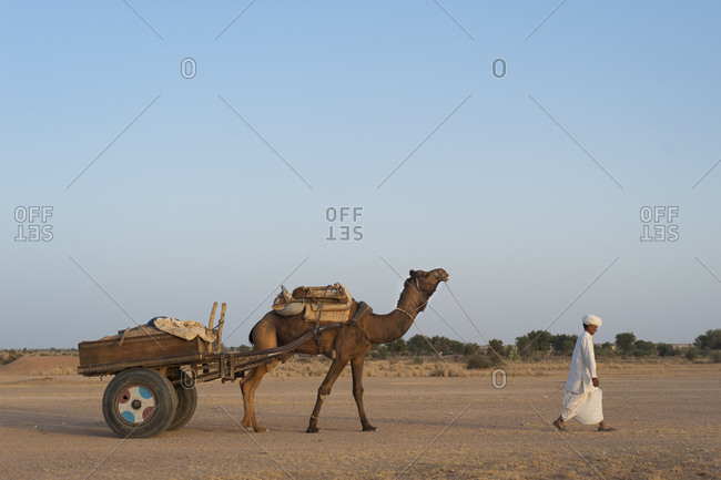 A Rajasthani man walks in front of his camel and cart in the desert