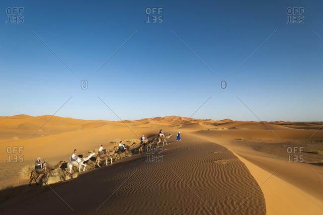 Erg Chebbi, Merzouga, Western Sahara, Morocco - June 10, 2012: A Tuareg leads tourists riding camels through the Sahara desert