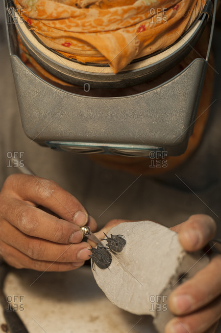 A skilled worker carefully exposes a fossilized Trilobite from the surrounding rock