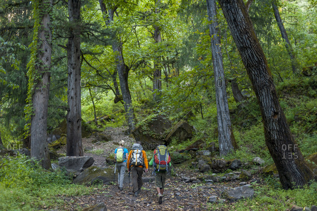 Trekkers walking through forested trail between Chhepka and Amchi in the remote region of Dolpa