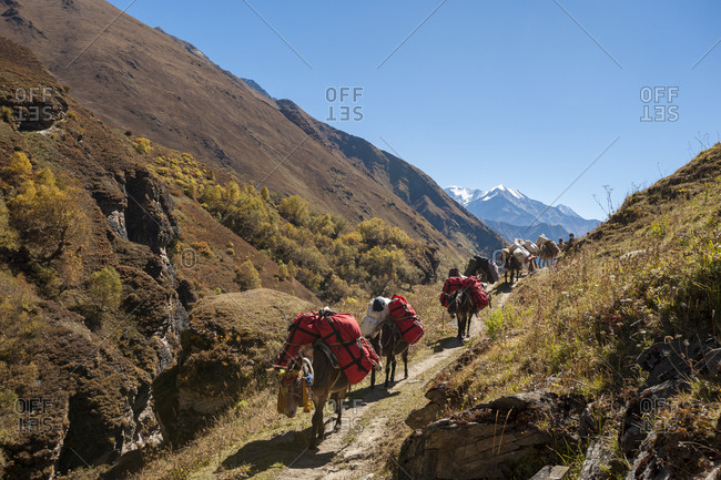 Mules loaded with trekking gear move along the Kagmara valley