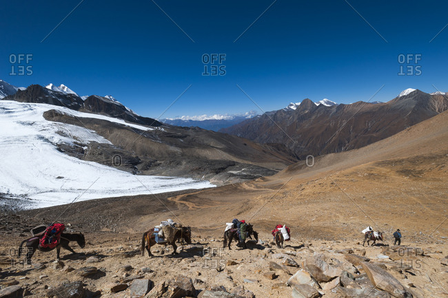 Pack horses laden with trekking gear make their way down from the Kagmara La in Dolpa, a remote region in Nepal
