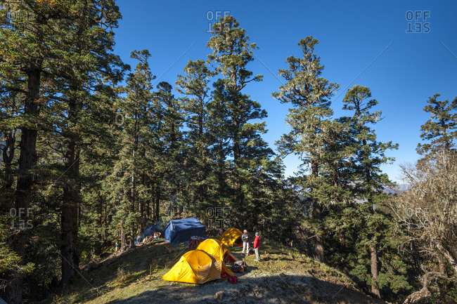 A trekking group sets a camp among the trees in the remote region of Dolpa in Nepal