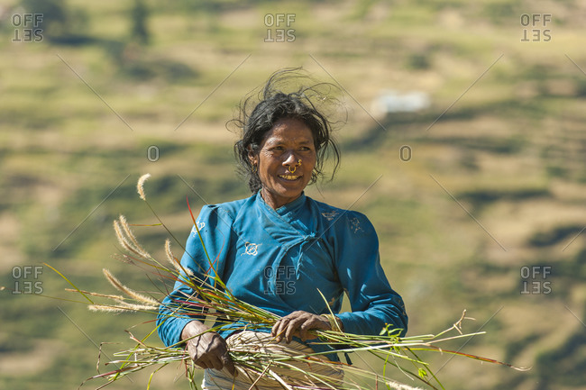 A woman in the Juphal valley harvests grass for the animals in a valley of terraced rice paddies