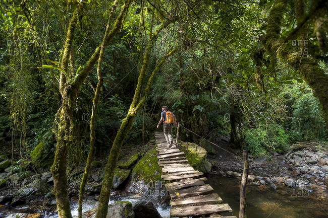 A hiker crosses a footbridge in the forest in the Cocora valley in Colombia