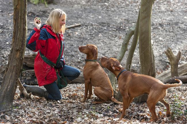 A woman takes her Vizslas for a walk in Putney heath