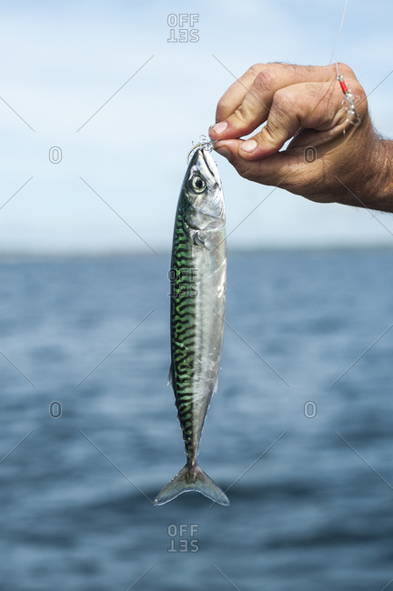 Fishing from Penzance in Cornwall