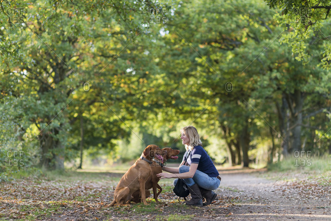 A woman takes her young Vizslas for a walk in Wimbledon common