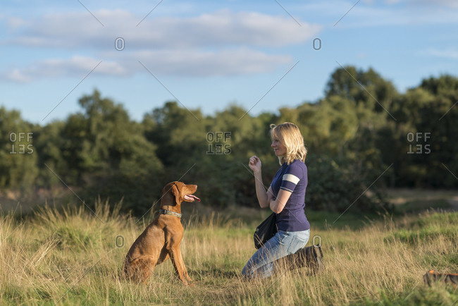 A woman takes her young Vizsla for a walk in Wimbledon common and teaches her how to sit