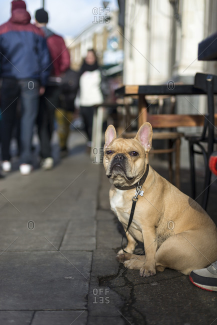 A dog on a lead in London's Broadway Market waits patiently for their owner