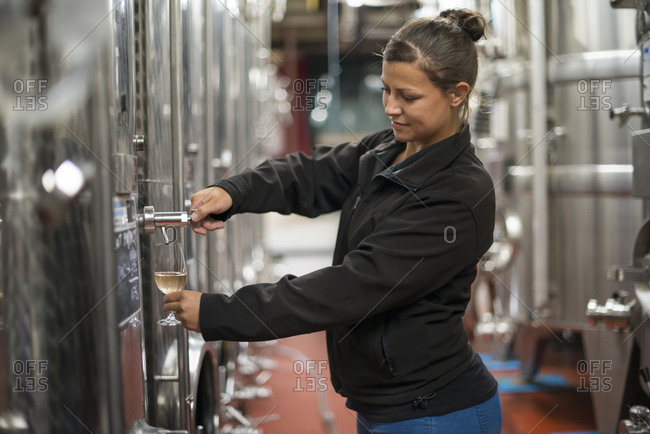 Ditchling Common, East Sussex, United Kingdom - October 6, 2015: A woman working in a winery in England pours a sample of white wine from a tank