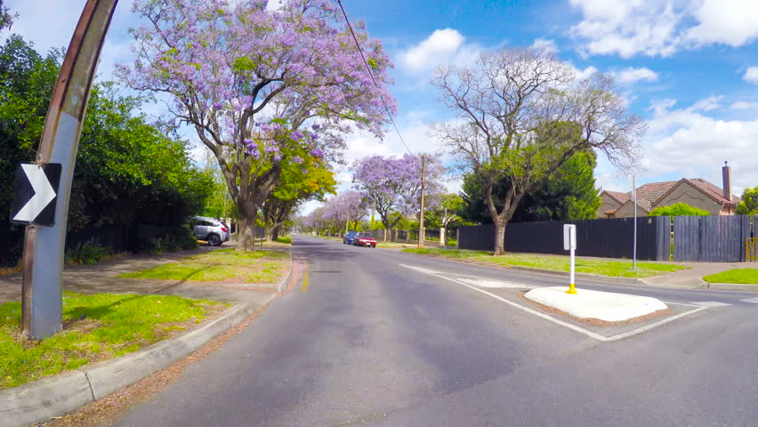Vehicle POV driving along beautiful tree canopy lined streets with purple Jacaranda trees, taken in Glenunga, Adelaide, South Australia.