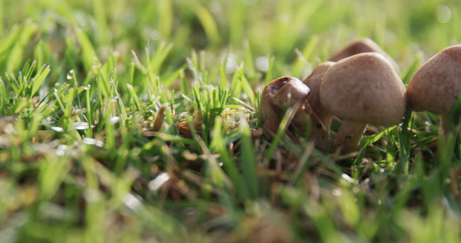 Mushroom growing in the grass on a sunny day 4k | Shutterstock HD Video #1006628674